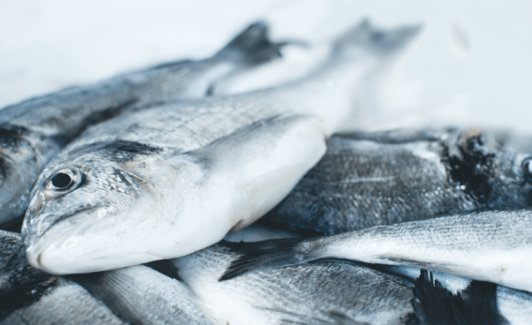 What the Loaves and Fishes Mean for Us Today